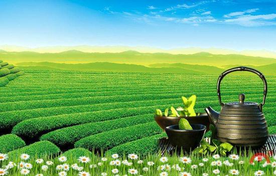 中国黑茶产地