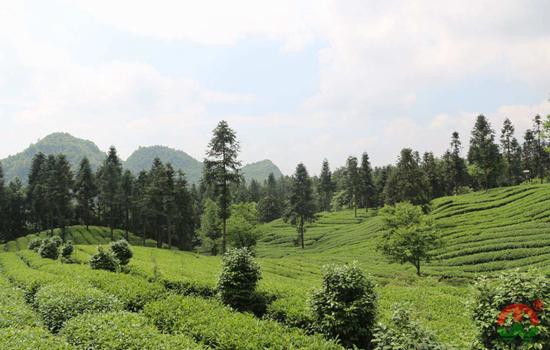 中国红茶产区